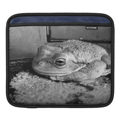 Foto blanco y negro de una rana en un travesaño co fundas para iPads