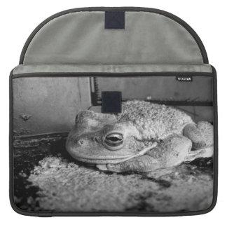 Foto blanco y negro de una rana en un travesaño co fundas para macbook pro