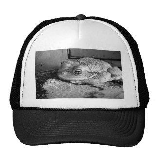 Foto blanco y negro de una rana en un travesaño co gorra
