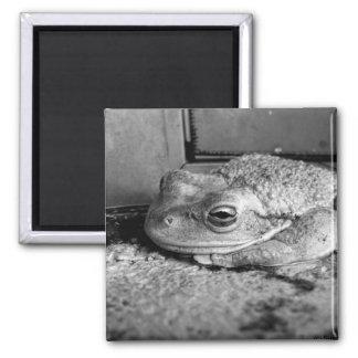 Foto blanco y negro de una rana en un travesaño co iman para frigorífico