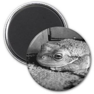 Foto blanco y negro de una rana en un travesaño co imán de nevera