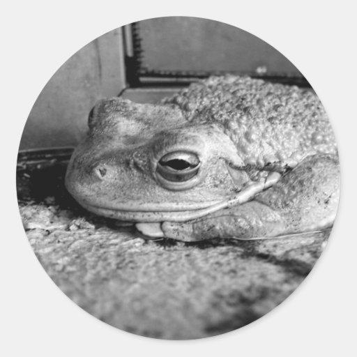 Foto blanco y negro de una rana en un travesaño co etiquetas