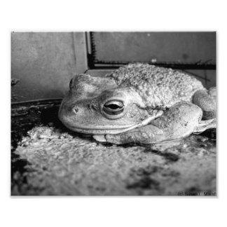 Foto blanco y negro de una rana en un travesaño co