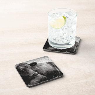 Foto blanco y negro del buey negro de Angus Posavasos De Bebida