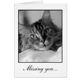 Foto blanco y negro dulce del gato de tabby tarjeta de felicitación