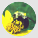 Foto borrosa del abejorro etiqueta