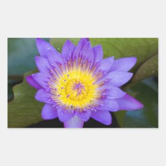 Foto brillante de la floración del lirio de agua pegatina rectangular
