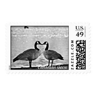 Foto canadiense de los gansos sellos postales