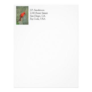 Foto cardinal del pájaro plantilla de membrete