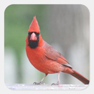 Foto cardinal pegatina cuadrada