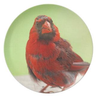 Foto cardinal plato de comida