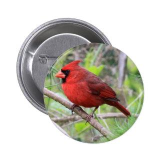 Foto cardinal septentrional pin redondo de 2 pulgadas