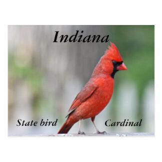Foto cardinal septentrional tarjetas postales