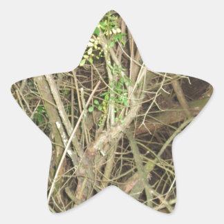 Foto CherryHill New Jersey América NVN664 de la Pegatinas Forma De Estrella Personalizadas