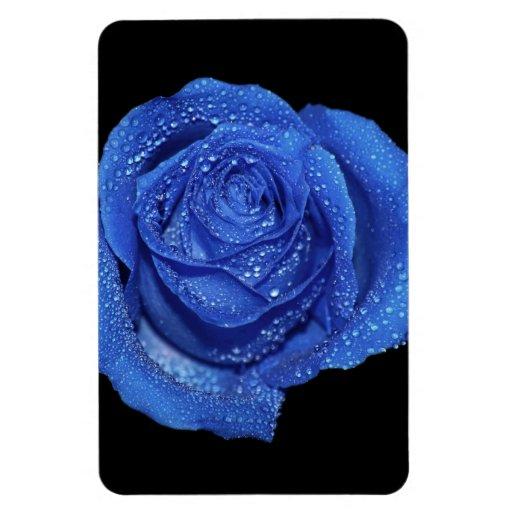 Foto color de rosa azul magnífica del arte iman
