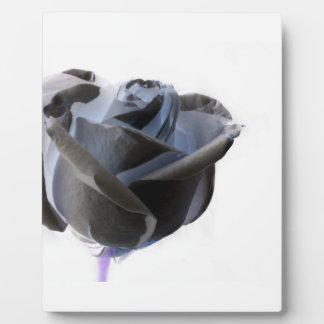 Foto color de rosa blanco y negro invertida placas de plastico
