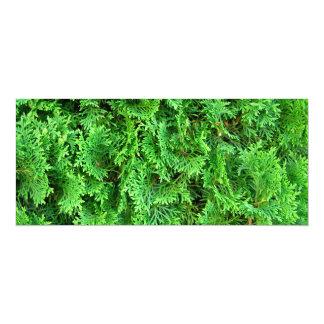 """Foto colorida del arte del arbusto del verde invitación 4"""" x 9.25"""""""
