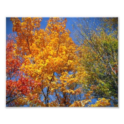 Foto colorida del paisaje de la naturaleza de las  fotografías