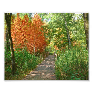 foto colorida del rastro