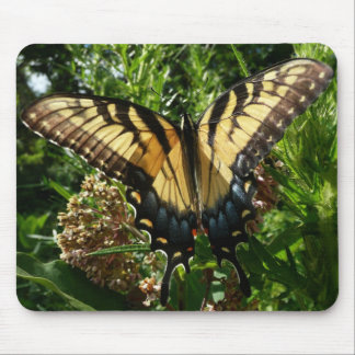 Foto colorida hermosa de la mariposa III de Alfombrillas De Ratones