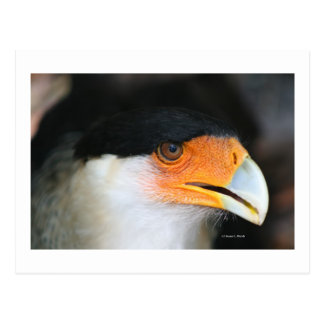 Foto con cresta de la imagen del tiro de la cabeza postal