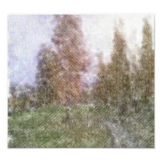 Foto corregida del bosque fotografía