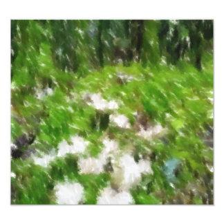 Foto corregida seta del bosque cojinete