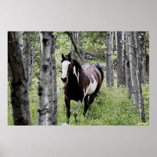 Foto corriente de la pintura del Pinto y del cabal Poster