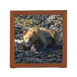 Foto costera de la fauna del oso grizzly