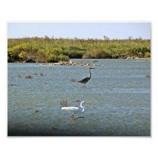 Foto costera de los pájaros