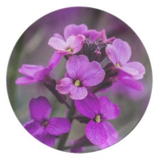 Foto cuadrada de las flores rosadas macras platos para fiestas