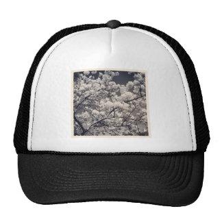 Foto cuadrada - flor de cerezo gorras