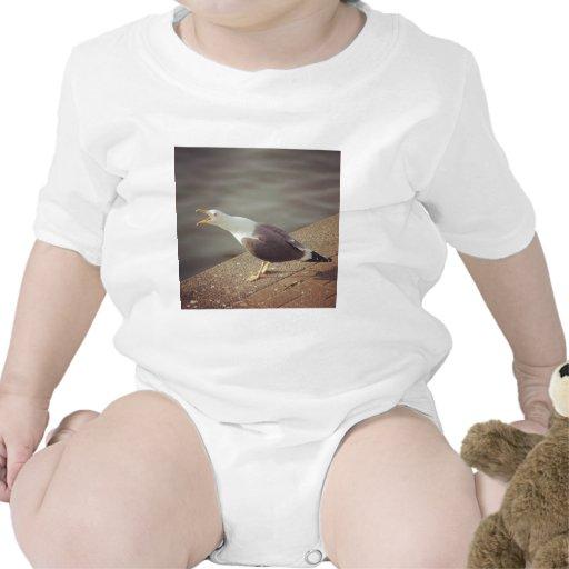 Foto cuadrada - gaviota graznadora trajes de bebé