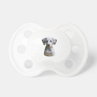 Foto dálmata del perro de perrito chupetes