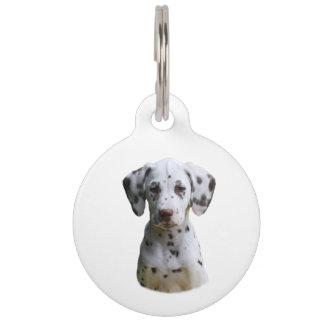 Foto dálmata del perro de perrito identificador para mascota