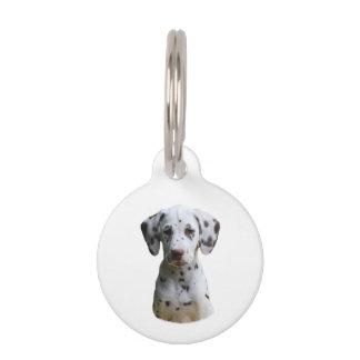Foto dálmata del perro de perrito placas de mascota