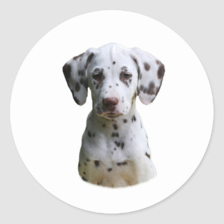 Foto dálmata del perro de perrito pegatina redonda