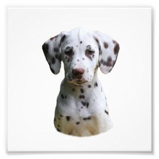 Foto dálmata del perro de perrito