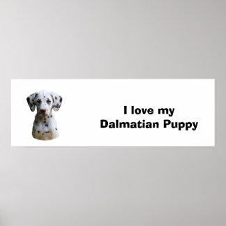 Foto dálmata del perro de perrito póster