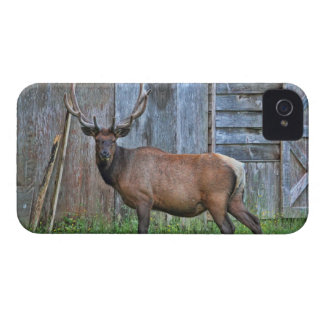 Foto de 6 del punto alces de Bull Case-Mate iPhone 4 Carcasas