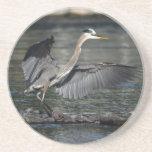 Foto de aterrizaje 3 del pájaro de la fauna de la  posavasos diseño