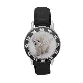 Foto de Bichon Frise Relojes