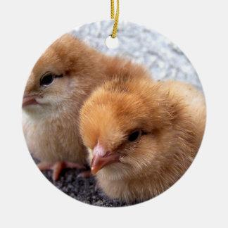 foto de dos de Rhode Island polluelos del rojo Adorno Navideño Redondo De Cerámica