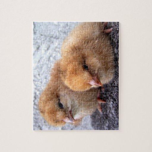 foto de dos de Rhode Island polluelos del rojo Puzzle