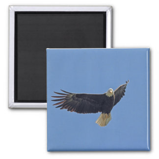 Foto de Eagle calvo Imán Para Frigorífico
