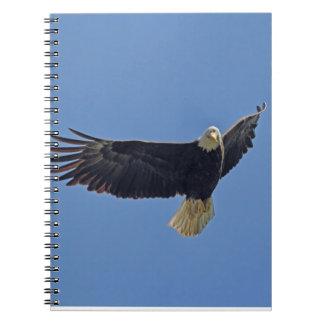 Foto de Eagle calvo Libro De Apuntes