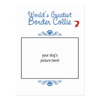¡Foto de encargo! El border collie más grande de l Tarjeta Postal