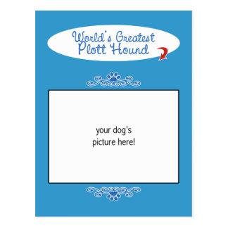 ¡Foto de encargo! El perro de Plott más grande de  Tarjeta Postal