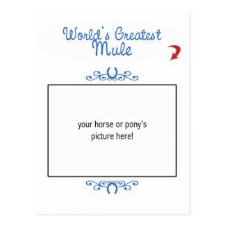¡Foto de encargo! La mula más grande de los mundos Postal
