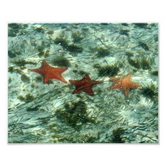 Foto de estrellas de mar coloridas fotografías